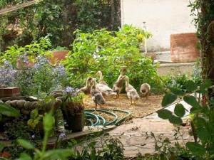 Ducks in plants